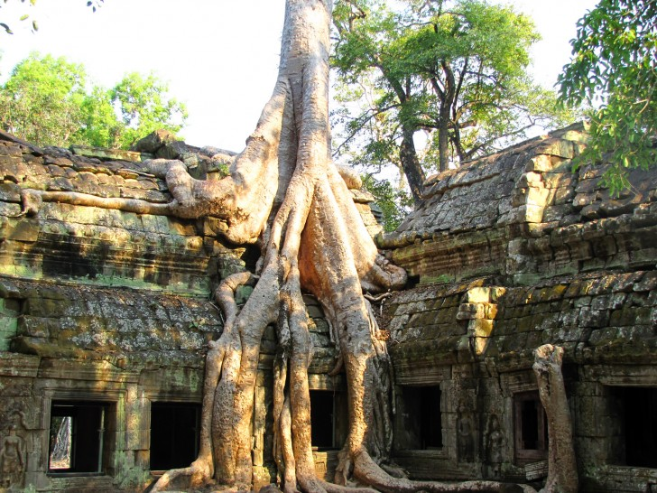 Ta Prohm, Angkor Wat, Cambodia